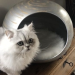 Dandy Ball, cocon pour chat fabrication artisanale argenté