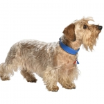 Collier pour chien Bercy made in france, cuir bleu