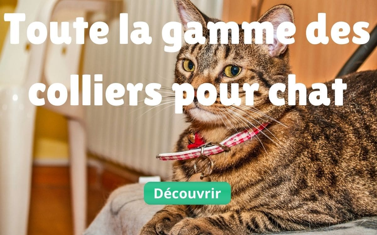 Gamme collier pour chats